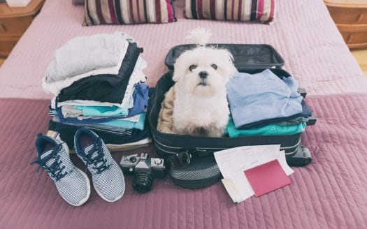Urlaub mit Hund - Eine Checkliste für den Urlaub mit Hund erleichtert die Planung.