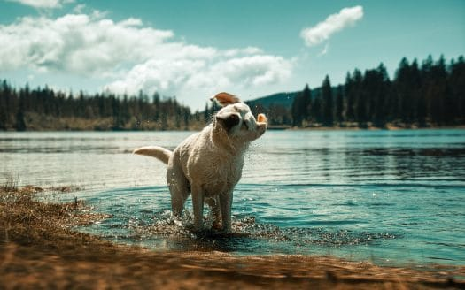 Urlaub mit Hund - Die Suche nach hundefreundlichen Badeplätzen