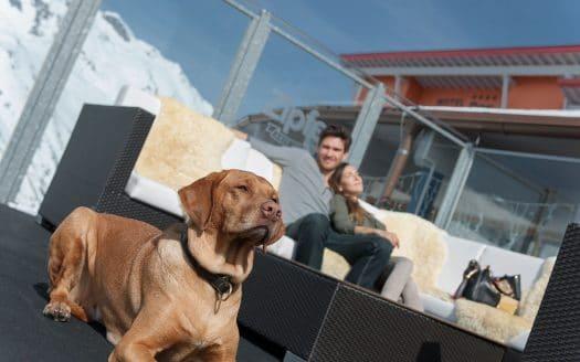 Hund, Magyar Viszla, Pärchen auf Terrasse im Winter, sonnig, SKI- und GOLFRESORT Hotel Riml, Österreichurlaub mit Hund