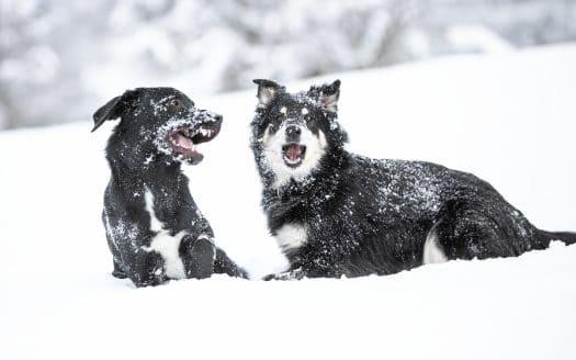 zwei Hunde im Schnee, Hotel Riederhof, Winterurlaub mit Hund in Österreich