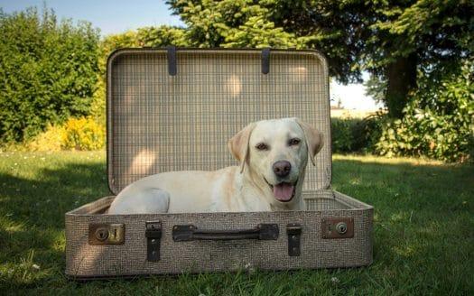Reisen mit Hund, Österreichurlaub mit Hund