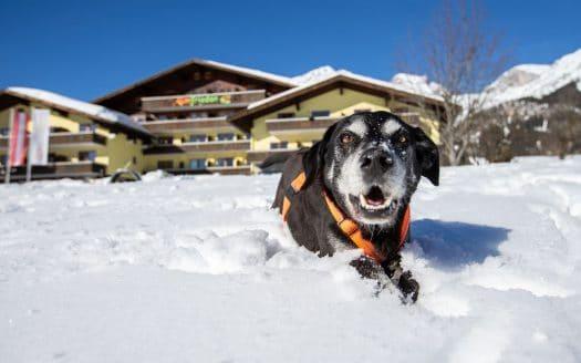 Winter, Winterurlaub mit Hund, hundefreundlich, Berge