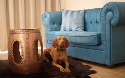 Wohnbereich, hundefreundlich, Hund liegend, Teppich