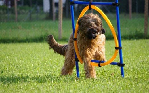 Agility, Urlaub mit Hund