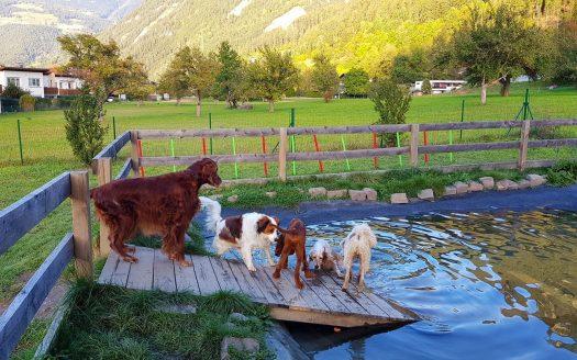 Teich, Schwimmen, schwimmende Hunde, Wasser, Wald, Berge, hundefreundlich