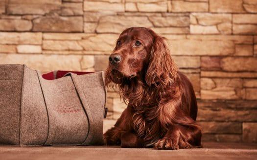 Brauner Setter, Haushund Bubu, Filztasche Riederhof, Wandern mit Hund, Urlaub mit Hund