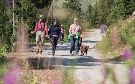 Menschen wandern mit Hund bei Sonnenschein, Hotel Bergfrieden, Urlaub mit Hund