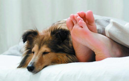 Hund im Bett, Hotel Falkensteiner Bad Leonfelden, Urlaub mit Hund in Österreich