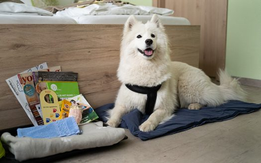 Hund im Zimmer Hotel Praterstern, Wien mit Hund