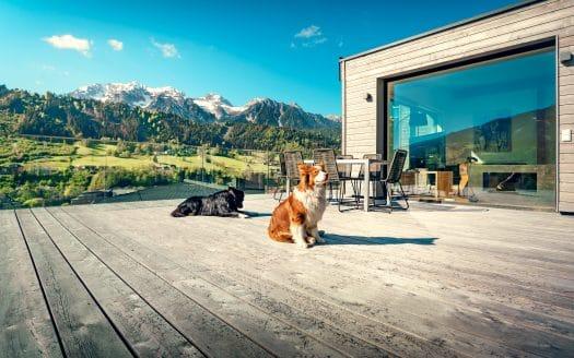Hunde auf der Terasse - Sommerurlaub mit Fellnasen im Chalets Coburg.